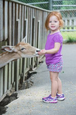 A young girl hand feeding at deer at Tweetsie Railroad.