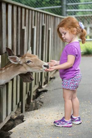 A young girl hand feeding a deer at Tweetsie Railroad