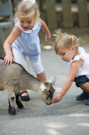 Two young girls hand feeding a goat in Deer Park at Tweetsie Railroad