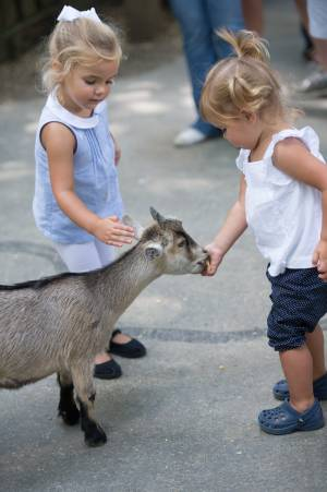 Two young girls hand feeding a goat in Deer Park at Tweetsie Railroad.