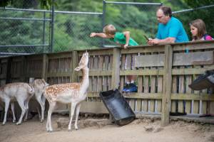 A young man and his family feeding a deer at Tweetsie Railroad.