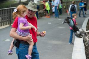 A father and daughter looking at an emu in Deer Park at Tweetsie Railroad.