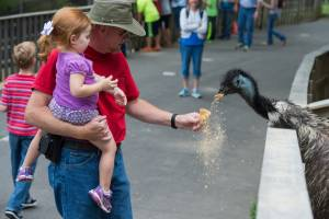 A father holding his daughter while feeding an emu in Deer Park at Tweetsie Railroad.